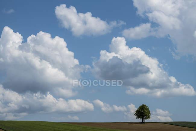 Autriche, Burgenland, arbre unique dans le champ — Photo de stock