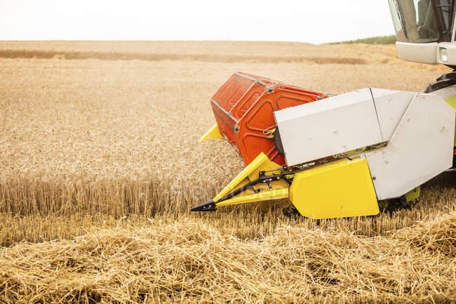 Serbia, Vojvodina, Combine harvesting wheat field — Stock Photo