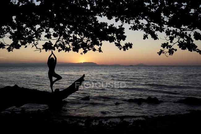 Молодая женщина практикует йогу на упавшем дереве в море на закате — стоковое фото