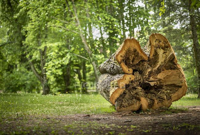 Австрія, Burgenland, Бад Татмансндорф, порожнистий стовбур дерева, дерево вхід — стокове фото