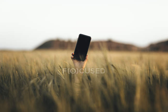 Hand reaching out from cornfield, holding smartphone — Fotografia de Stock