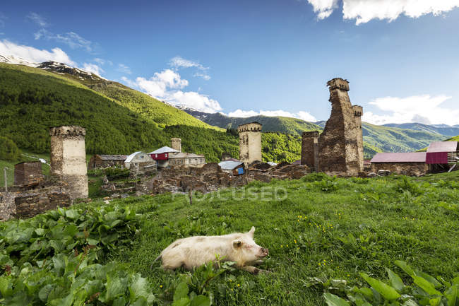 Georgia, Svaneti, Samegrelo-Zemo Svaneti, Ushguli, pig lying in meadow — Stockfoto