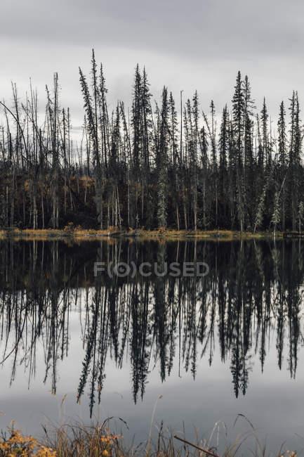 Canadá, Colúmbia Britânica, madeira morta após incêndio florestal — Fotografia de Stock