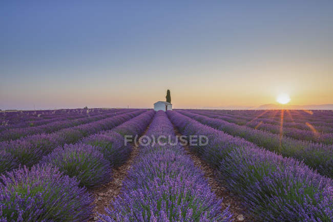 Франция, Иль-де-Франс, Валансоль, лавандовое поле у Фабрегаса — стоковое фото