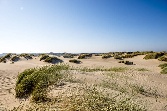 Germany, Schleswig-Holstein, Sylt, sand dunes — Stock Photo