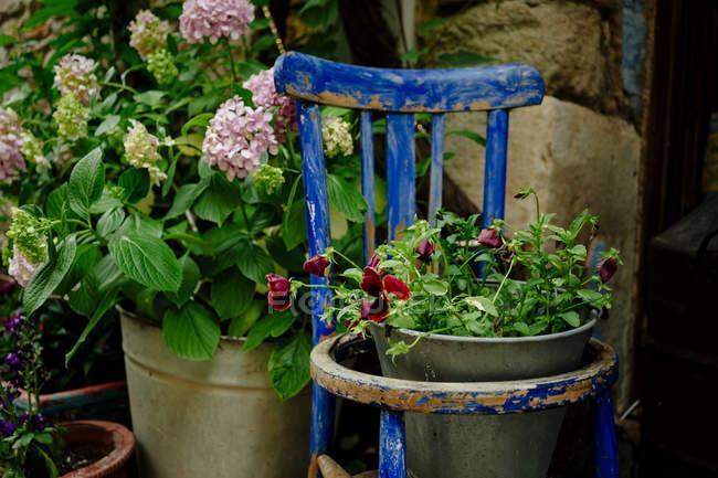 Квіти в металевому букеті, старий дерев'яний стілець — стокове фото