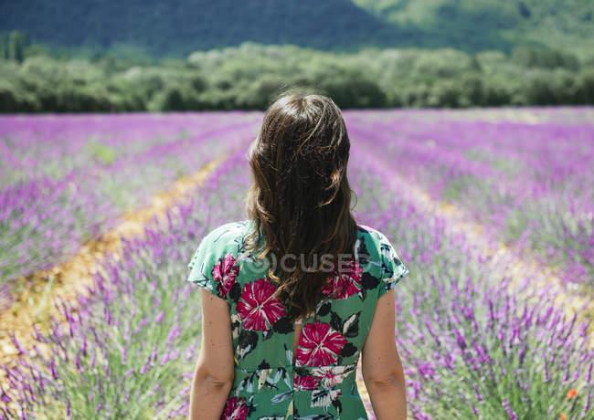 France, Provence, plateau de Valensole, vue de l'arrière de la femme debout dans un champ de lavande en été — Photo de stock