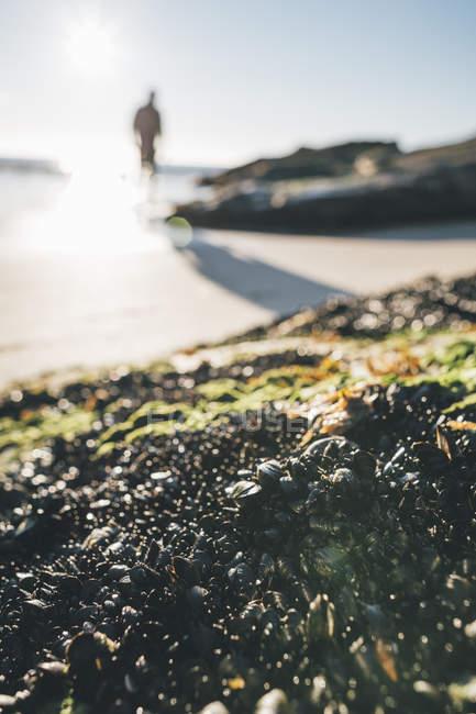Norway, Lofoten, Moskenesoy, Man walking into the sun  at Kvalvika Beach — Stock Photo