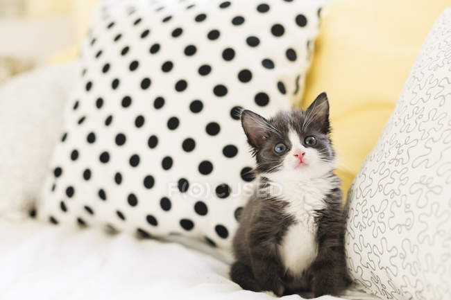 Close up of Starring kitten at home — Stock Photo