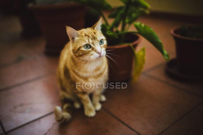 Portrait of tabby cat sitting on tiled floor — Stock Photo