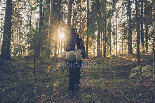 Suécia, Sodermanland, mochileiros caminhando na floresta remota em backlight — Fotografia de Stock