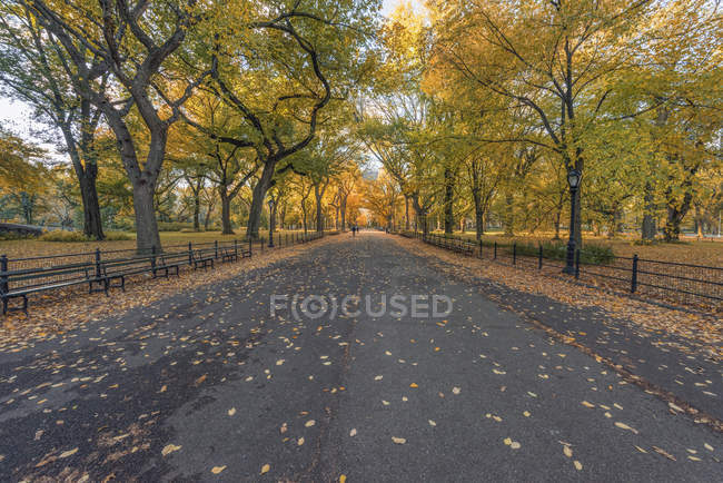 USA, New York City, Manhattan, path in Central Park — Stockfoto