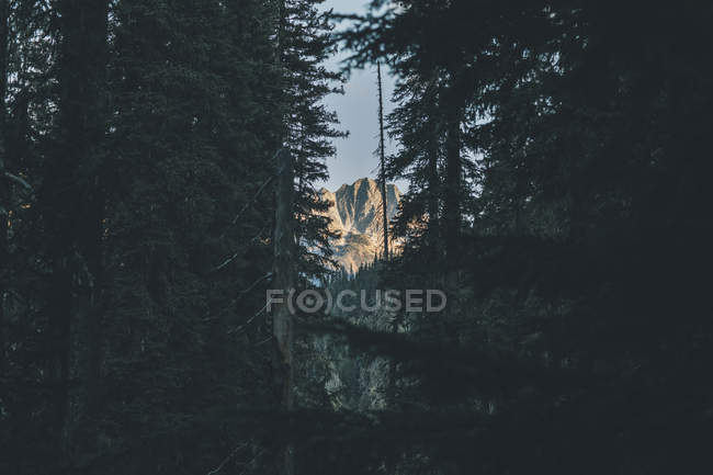 Canada, British Columbia, Columbia-Shuswap A, Glacier National Park, mountain and trees — Stock Photo