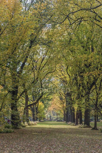 USA, New York City, Manhattan, Central Park — Photo de stock