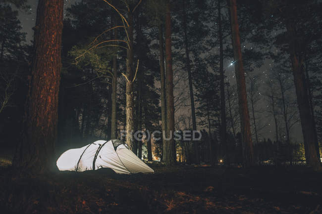 Sweden, Sodermanland, tent in forest under starry sky at night — стоковое фото