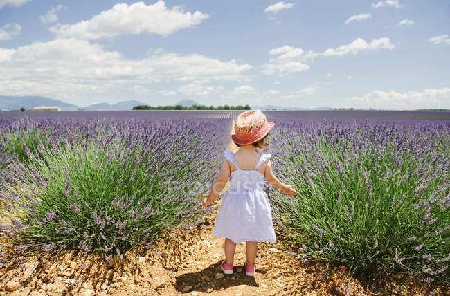 France, Provence, Valensole plateau, back view of toddler girl standing in purple lavender полях влітку — стокове фото