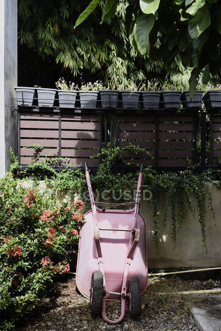 Pink wheelbarrow in the garden surrounded by plants — стоковое фото