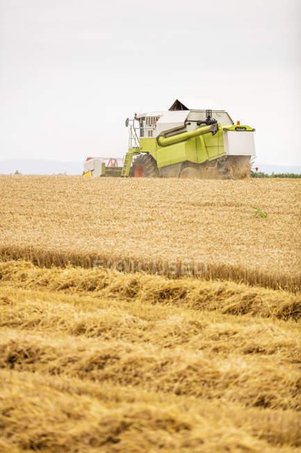 Serbia, Vojvodina, Combine harvesting wheat field — стоковое фото