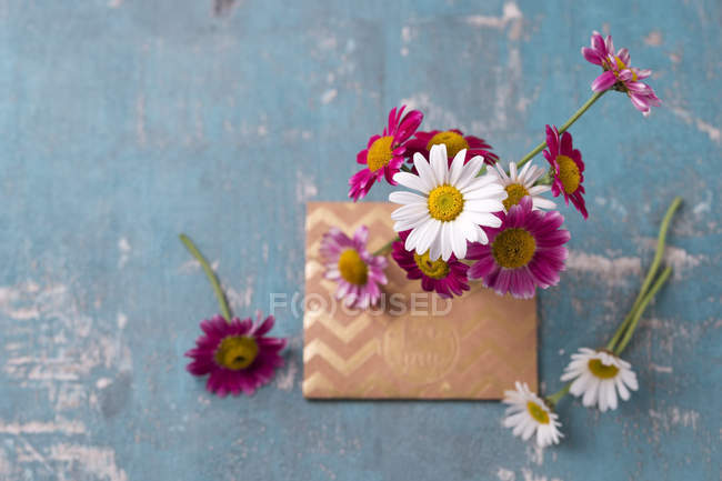 Close up of Marguerites and envelope — Stock Photo