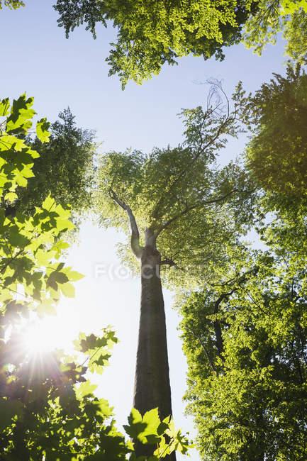 Allemagne, Leipzig, forêt alluviale au printemps au contre-jour — Photo de stock