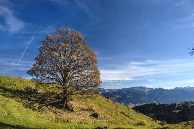 Allemagne, Bavière, Allgaeu Haute-Alpes Réserve naturelle — Photo de stock