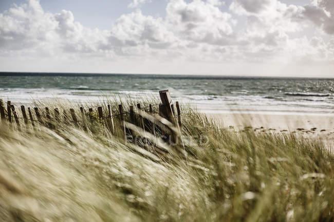 Франція, Нормандія, Портпід, Контантін, дерев'яний паркан на пляжі дюни — стокове фото