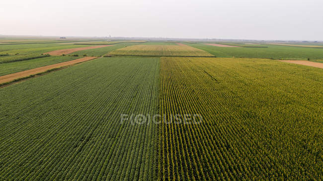Serbia, Vojvodina, Aerial view of corn, wheat and soybean fields in the late summer afternoon — Stock Photo