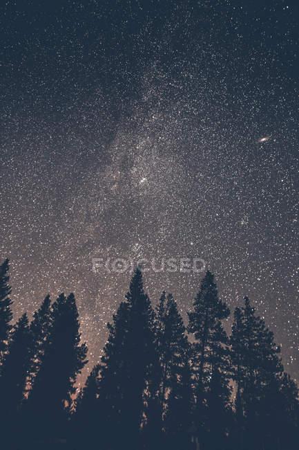 Canada, British Columbia, Chilliwack, cielo stellato di notte, via lattea — Foto stock