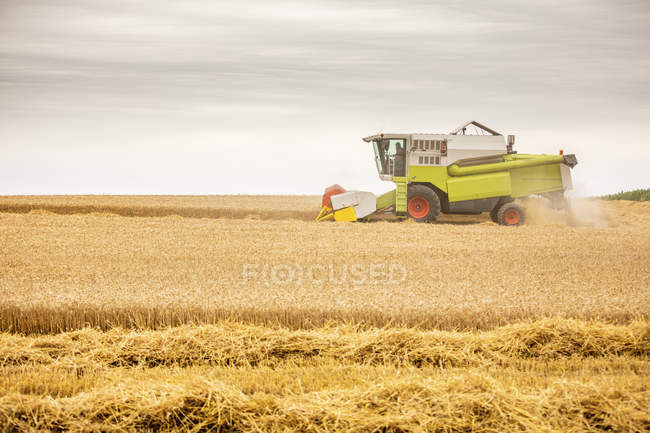 Serbia, Vojvodina, Combine harvesting wheat field — Stock Photo