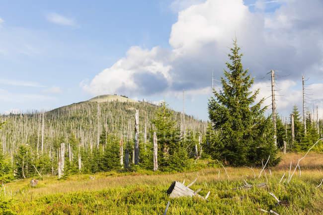 Німеччина, Баварія, Лузен, Баварський ліс Національний парк, Лузен, мертві дерева — стокове фото