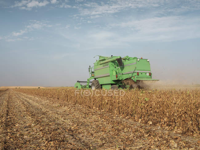 Serbia, Vojvodina, Combine harvester in soybean field — стоковое фото