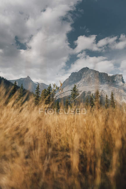 Canada, British Columbia, Columbia-Shuswap A, Rocky Mountains, Michael Peak, Yoho National Park — Stock Photo