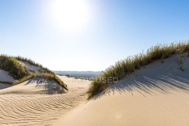 Alemanha, Schleswig-Holstein, Sylt, Duna de areia de encontro ao sol — Fotografia de Stock