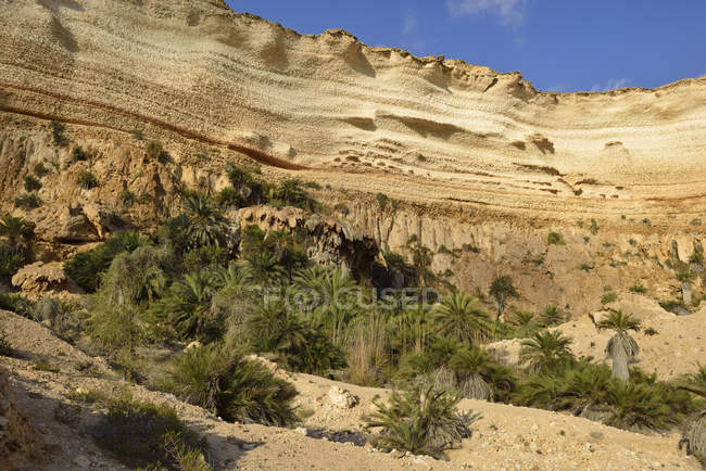 Oman, Dhofar, canyon calcareo di Wadi Shuwaymiyah — Foto stock