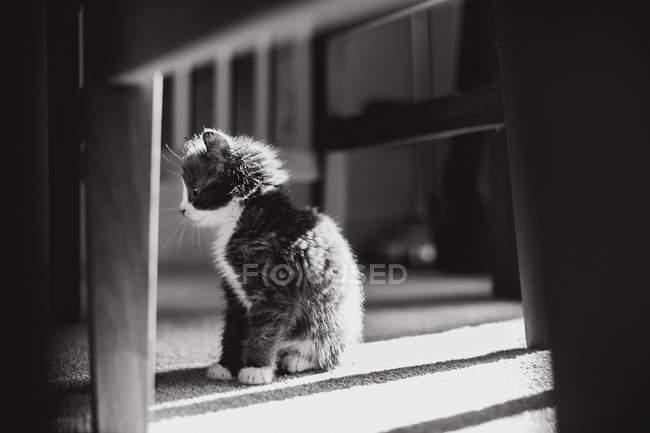 Kitten sitting on the floor watching something — Stock Photo