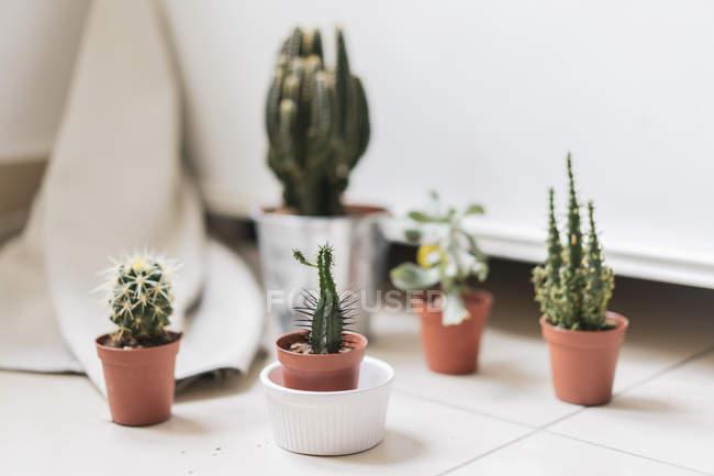 Succulente in vaso e cactus sulla tabella — Foto stock