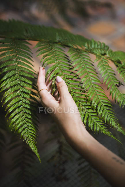 Hand of a young woman touching fern leaf — Stock Photo