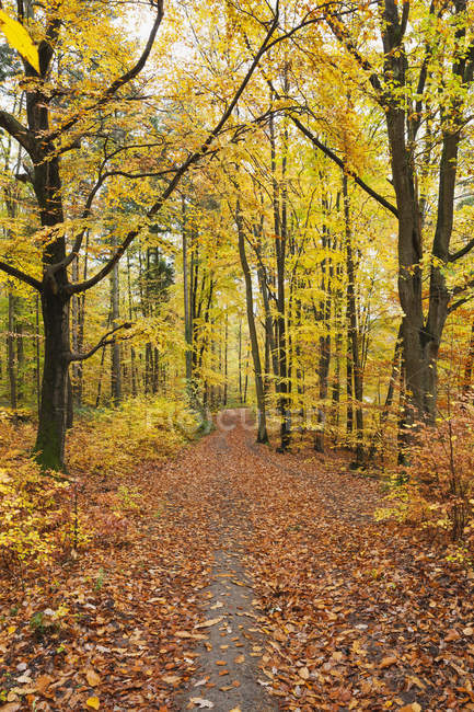 Germany, Rhineland-Palatinate, Palatinate Forest Nature Park in autumn — Stock Photo