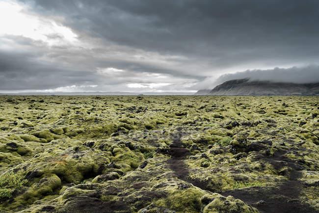 Iceland, Kirkjubaejarklaustur, Dverghamrar, Field of lava overgrown with moss — стокове фото