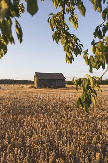 Fienile in legno in campo, stagione autunnale — Foto stock