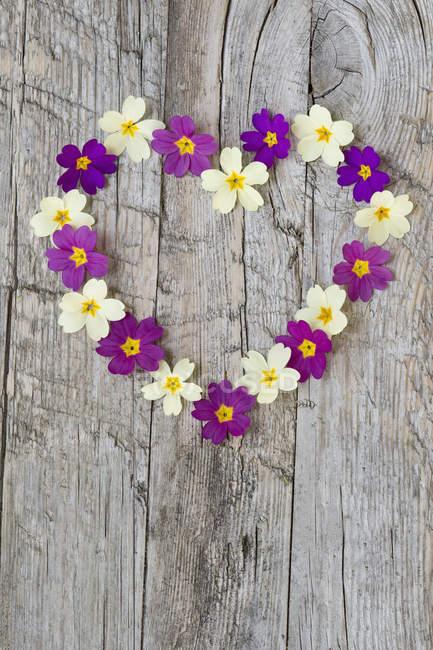Coração formado com flores de prímula na madeira intemperizada — Fotografia de Stock