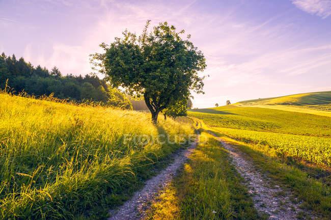 Áustria, Innviertel, campo e pista de terra pela manhã — Fotografia de Stock