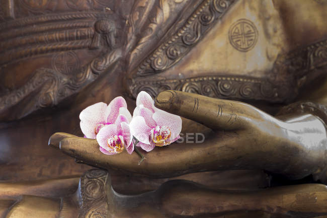 Hand of buddha statue with orchids — Stock Photo