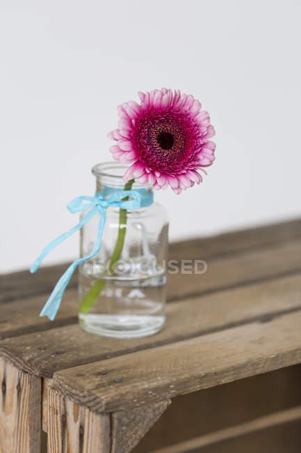 Розовая Гербера в цветочной вазе — стоковое фото