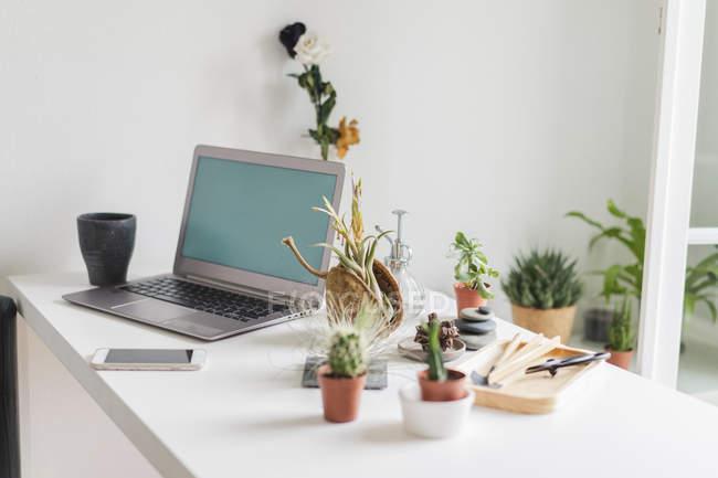Laptop e variazione di piante succulente a casa — Foto stock