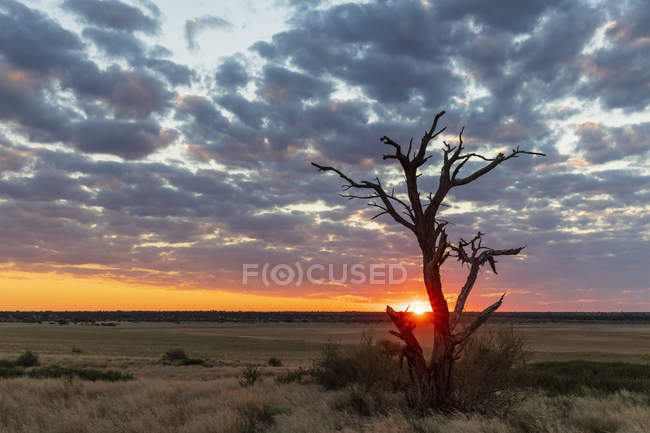 Africa, Botswana, Kgalagadi Transfrontier Park, Mabuasehube Game Reserve, Mabuasehube Pan at sunset — Stock Photo