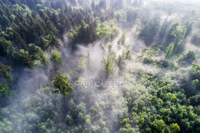 Germany, Baden-Wuerttemberg, Swabian Alb, Aerial view of Schurwald, morning fog — Stock Photo