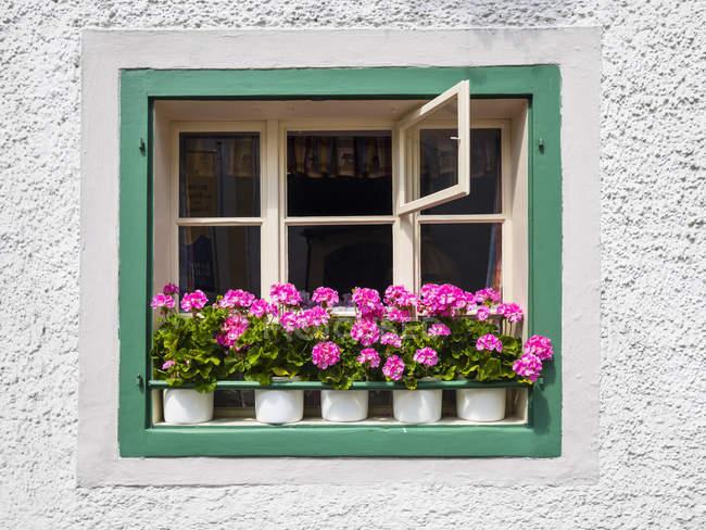 Австрія, Зальцкаммергут, Санкт-Гільген, вікна з кімнатні рослини — стокове фото