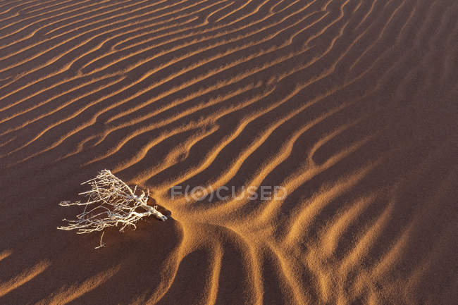 Africa, Namibia, Namib desert, Naukluft National Park, dead bush on sand dune — стоковое фото
