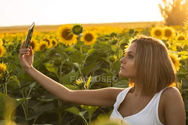 Молода жінка в області соняшнику, що приймають селфі в мобільному телефоні — стокове фото